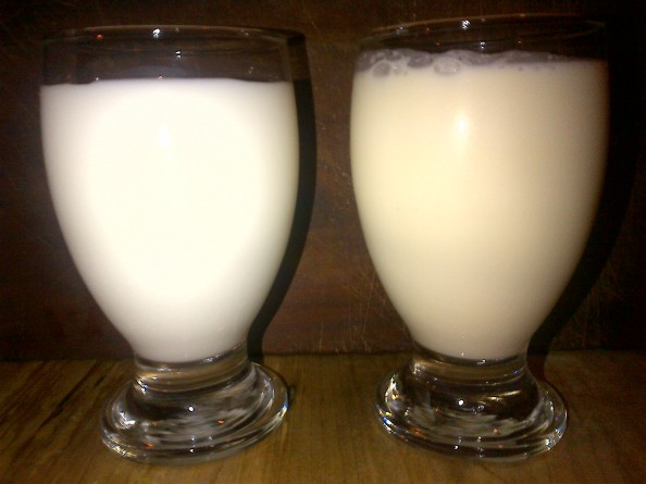 Comparing glasses of regular, store-bought milk (left) and organic, grass-fed milk (right)