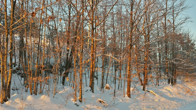 Early morning sun warms snowbound trees.